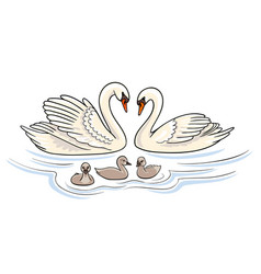 Swans family vector