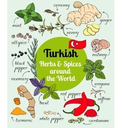 Turkish herbs and spices vector image