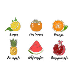 Engraved style organic vegetables collection for vector