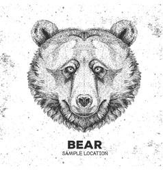 Hipster animal bear hand drawing muzzle vector