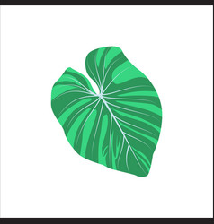 Philodendron green leaf vector