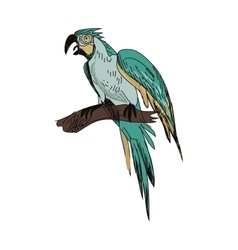 doodle parrot vector image vector image