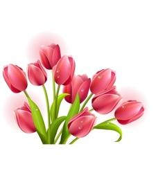 Bunch tulips isolated vector