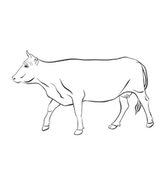 Cow drawing with floral ornament decoration vector image