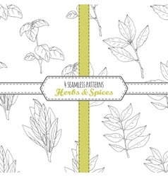 Hand drawn seamless patterns collection with sage vector image