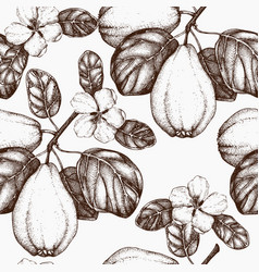 quince vintage background vector image