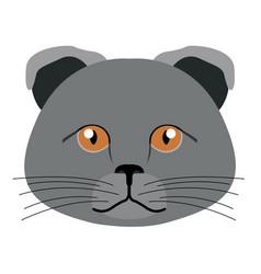 scottish fold cat avatar cat breeds vector image