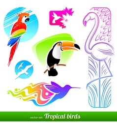 Set stylized decorative tropical birds vector