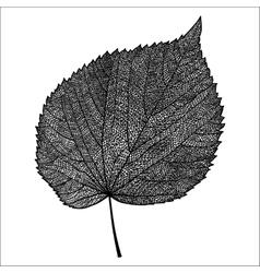 Skeletonized leaf vector