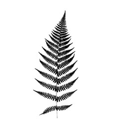 fern leaf silhouette vector image