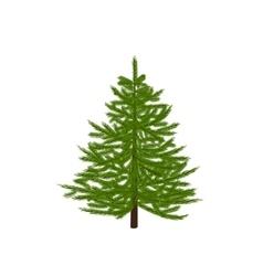 Green fir tree Christmas symbol New Year On a vector