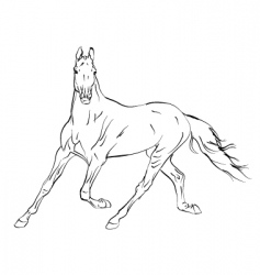horse Arab vector image