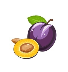 Plum ripe juicy fruit vector