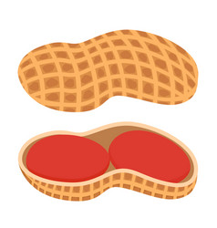 fresh peanut nutshell nuts in cartoon style flat vector image