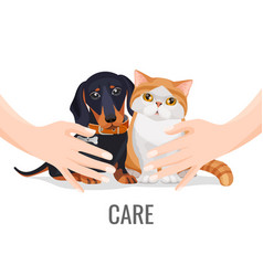human hands take care about cute pets dog and cat vector image