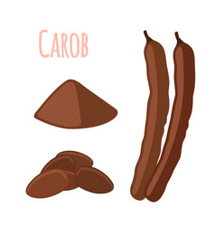 carob pods beans powder superfood vegetarian vector image
