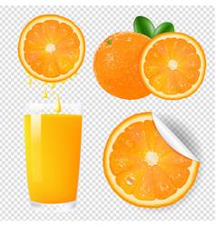 orange fruits set vector image