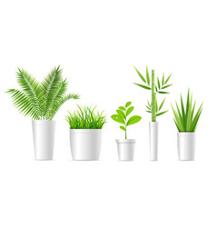 realistic detailed 3d green houseplant set vector image