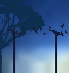 Rest pigeons vector