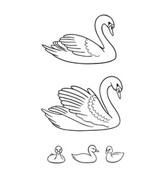 Set swans in contours - udults and babies vector