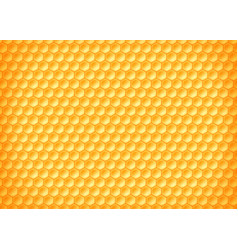 texture pattern yellow honeycombs with honey vector image