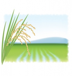 rice field vector image vector image