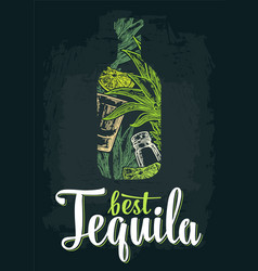 Bottle tequila with glass cactus salt lime vector