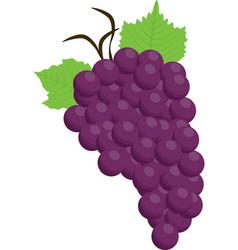 Grapes purple food fruit con vector