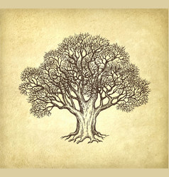 ink sketch of oak without leaves vector image