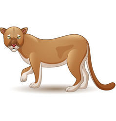 Puma isolated on white background vector