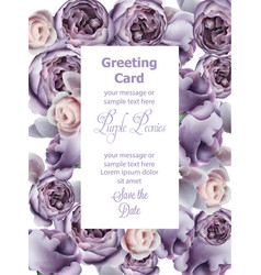 purple peony flowers card watercolor vector image
