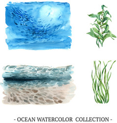 Set watercolor under sea kelp on white vector