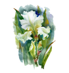 Summer white watercolor flower on white background vector
