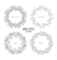 Spicy herb circle frames collection Hand drawn vector image vector image