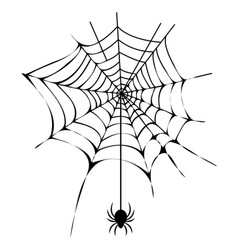 Black thin web with spider isolated vector