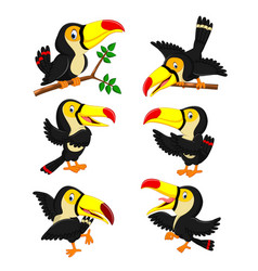 Collection yellow beak toucan vector