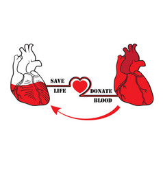 donate blood save life vector image