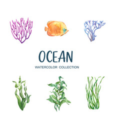 Set isolated watercolor coral on white vector