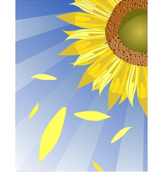 Sun flower background vector