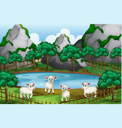 four sheeps by the pond vector image