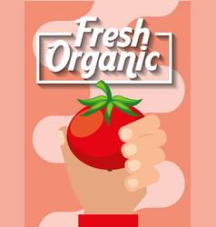hand holding vegetable fresh organic tomato vector image