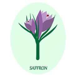 Saffron flower vector