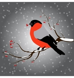 bullfinch sitting on branch with a twig of Rowan vector image vector image