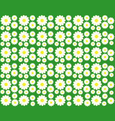 chamomile on a green background vector image