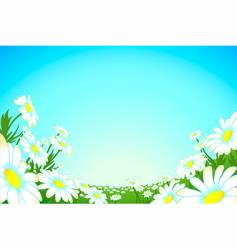 summer chamomile meadow vector image vector image
