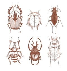 Nice hand drawn beetles vector image