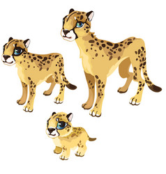 maturation stages of the leopard animal vector image
