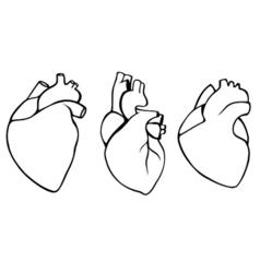 A set of human hearts vector