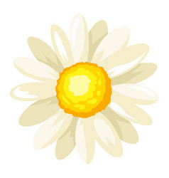 chamomile flower adversting icon vector image