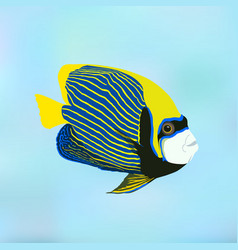 Fish Emperor angelfish vector